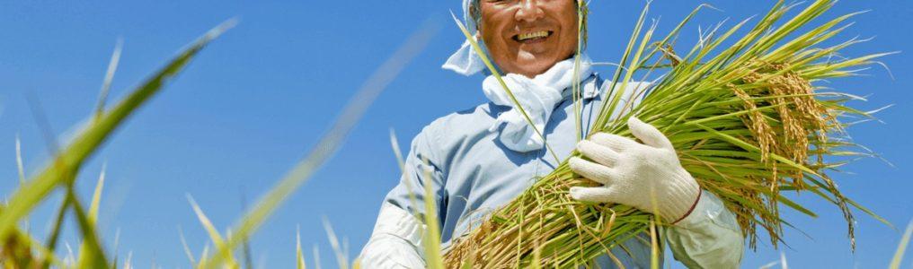 特定技能 農業