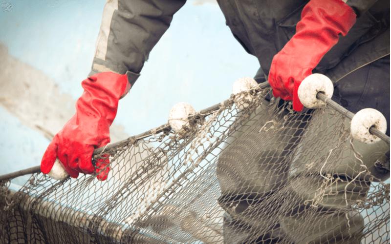 特定技能『漁業』の業務内容