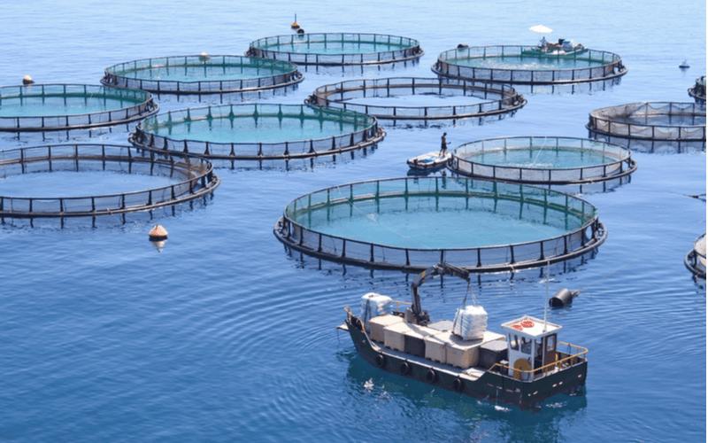 特定技能『漁業』の試験内容